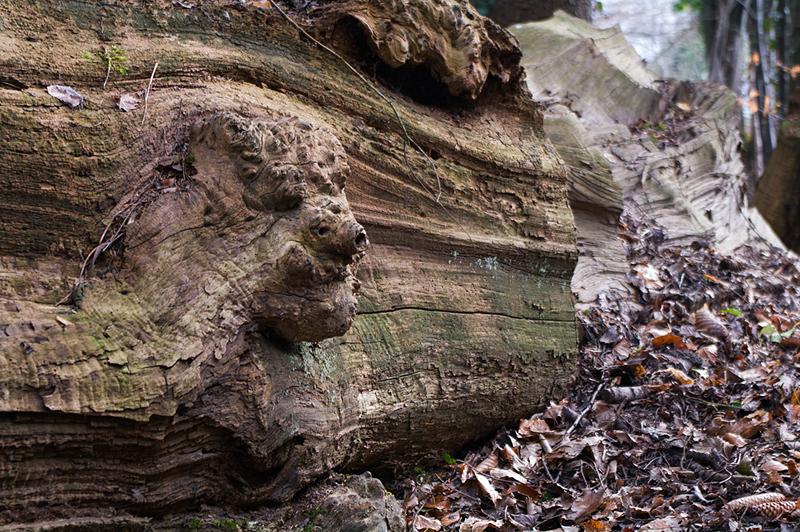 Age mûr et tête de bois