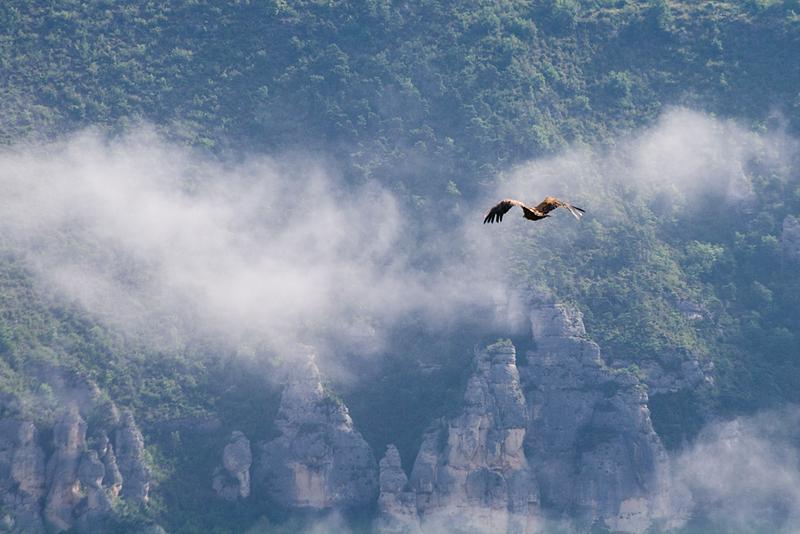 Vol dans la brume