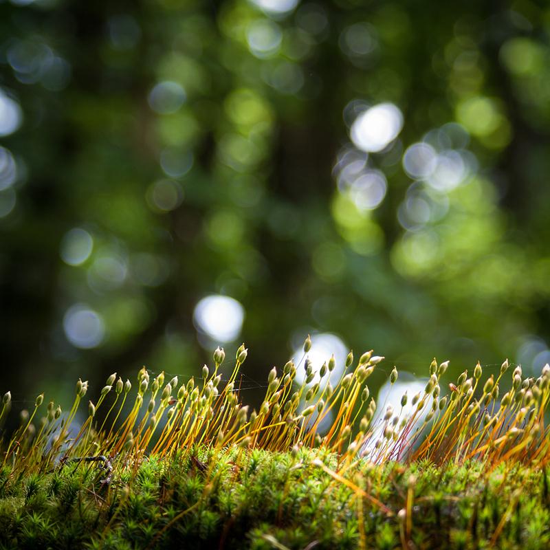 La petite forêt des  sous-bois