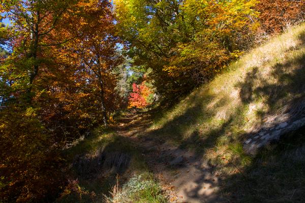 L'automne en balade