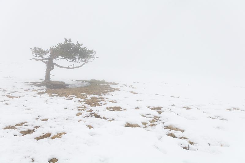 Sans se presser, l'hiver s'efface