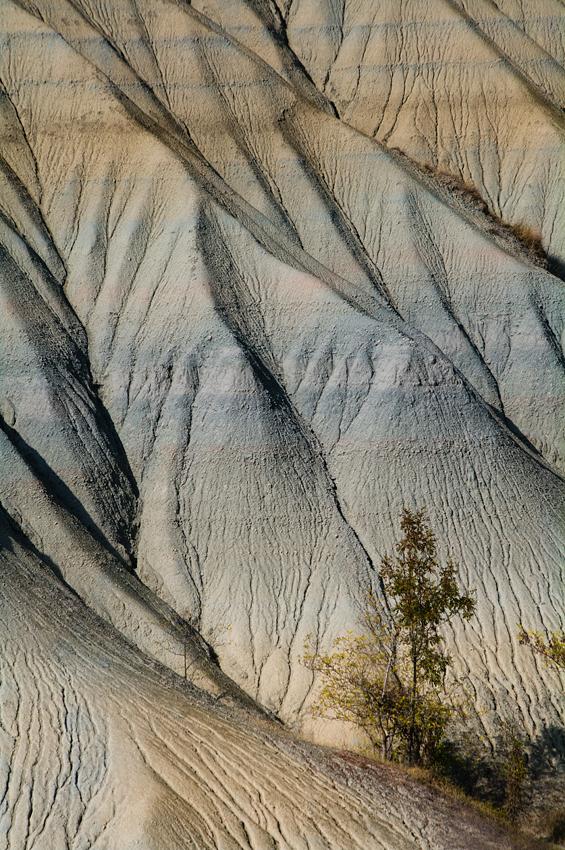 Zoom sur...  le désert ?