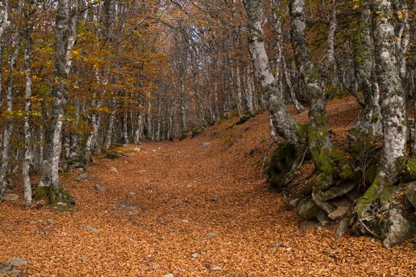 Nos chemins dans les bois