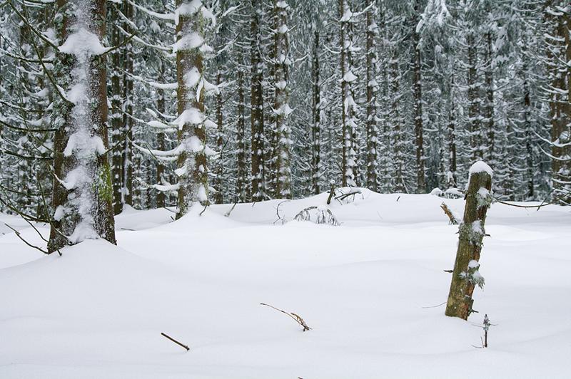 Les bois blancs