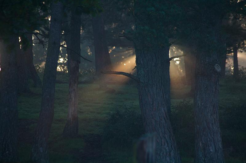 Dans le brouillard d'automne