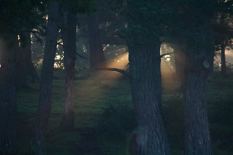 Dans le brouillard d
