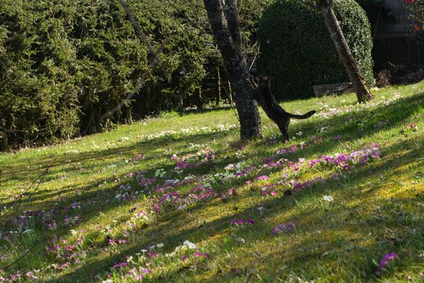Le printemps à la maison...