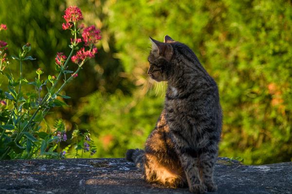 Look Cat me