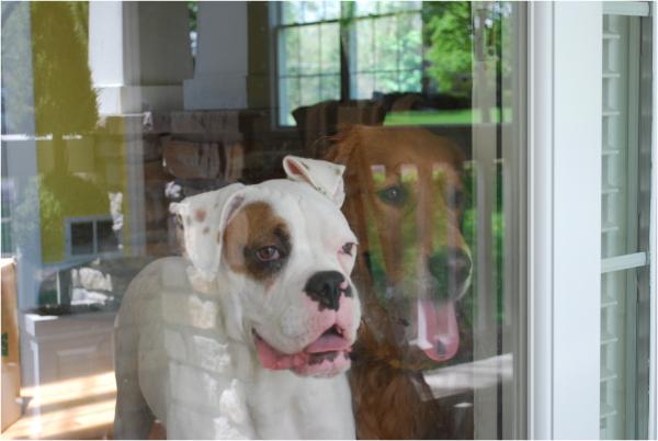 i wuv my puppies