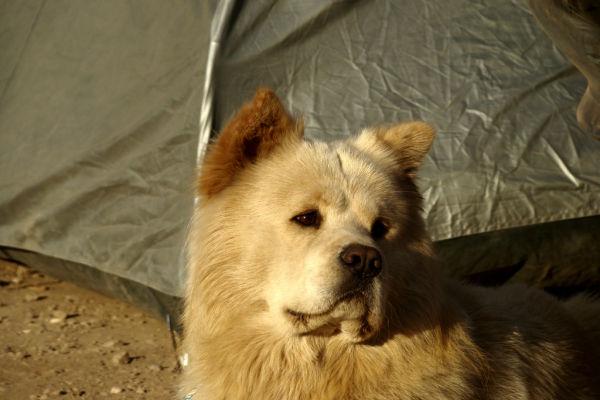 un perro en una terma