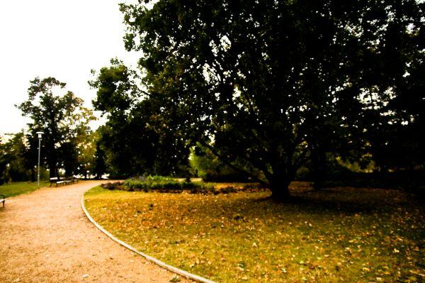 short afternoon walk