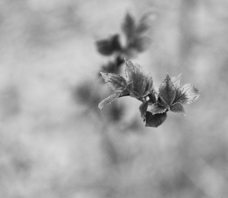 spring in black&white
