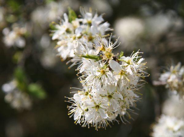 spring, flower, sun
