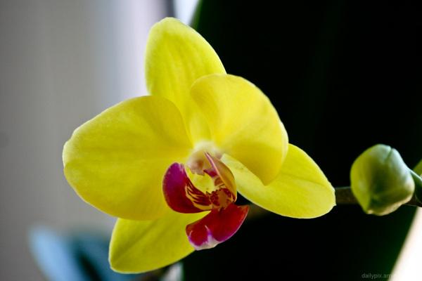 Spring I.