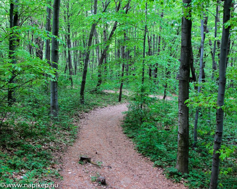 saturday trail