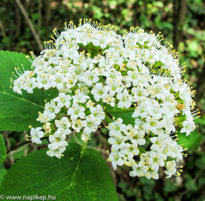 flower series II.