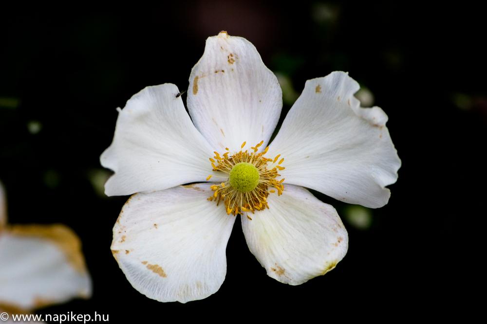 end-summer flower