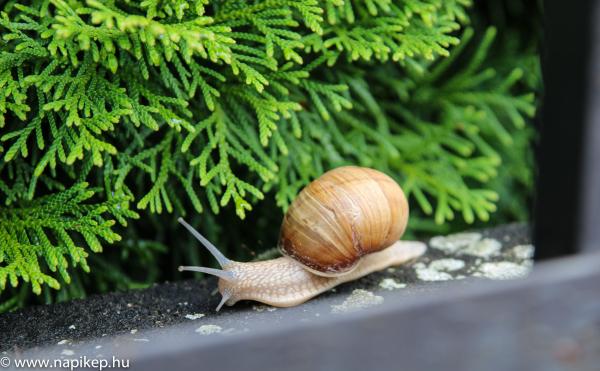 """snail in a """"bracket"""""""