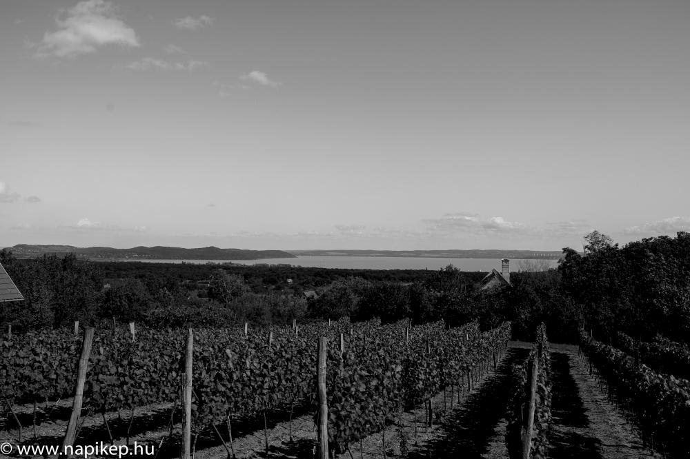 another Balaton landscape