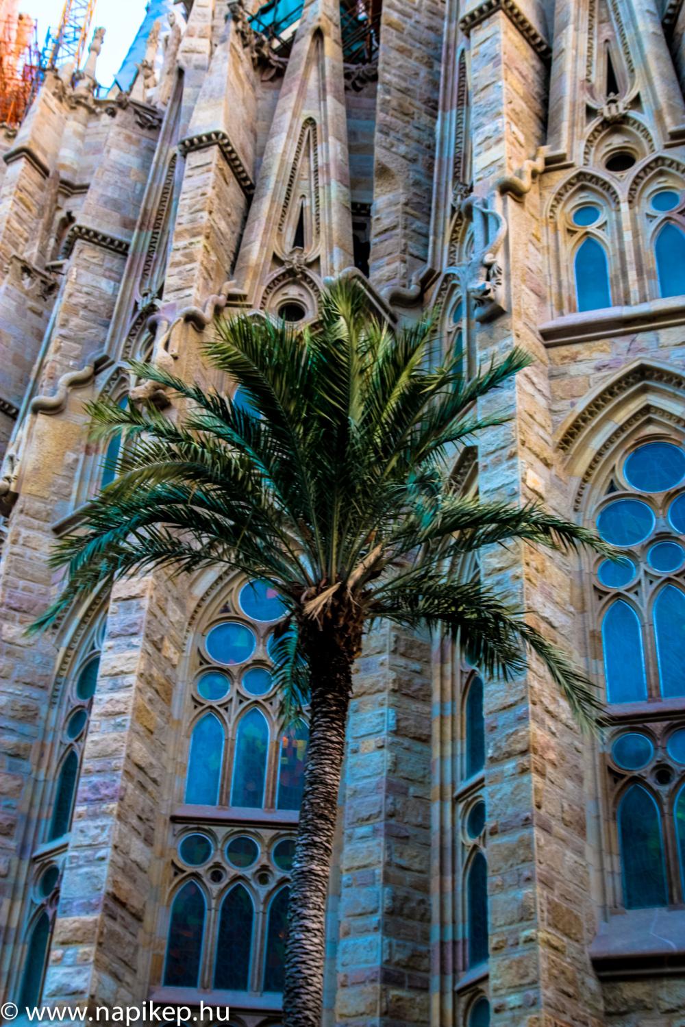 palms, palms everywhere