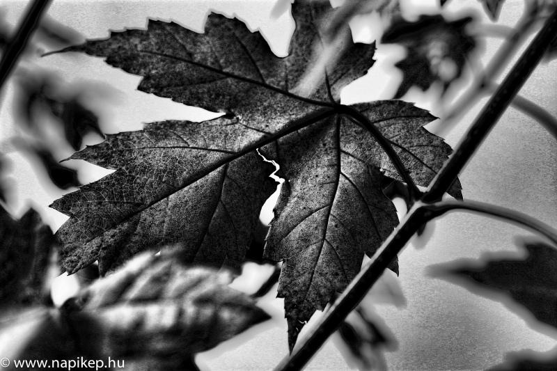 autumn feelings II