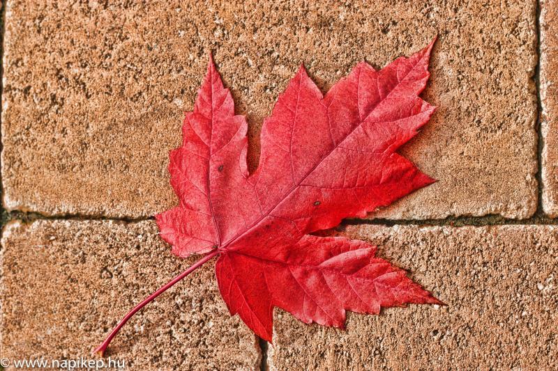 autumn feelings III.