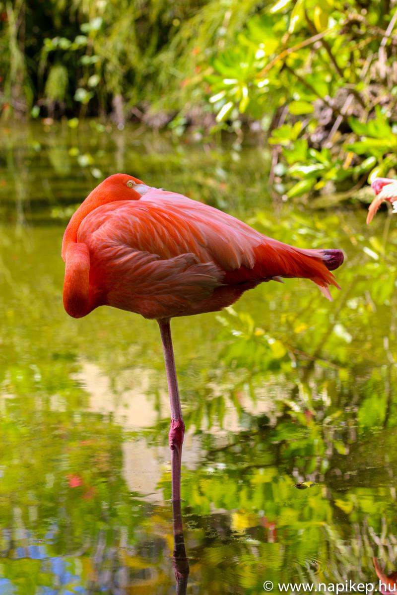 Flamingo II.