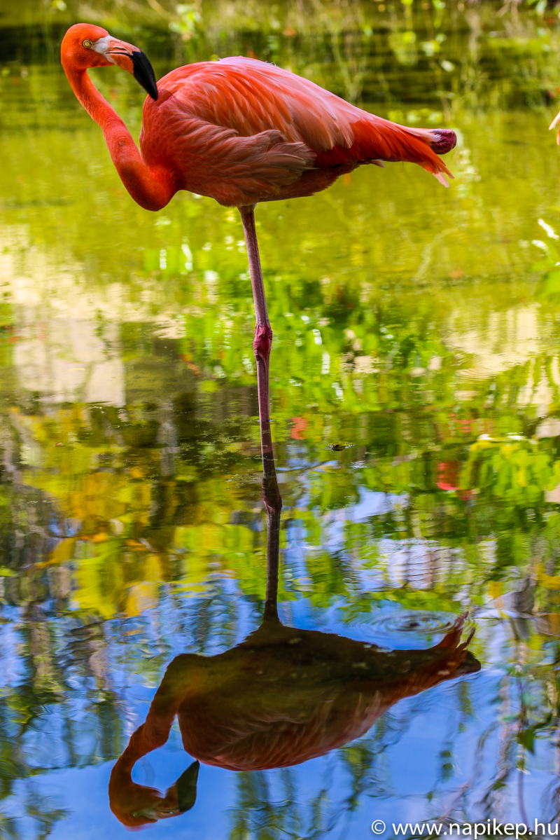 Flamingo III.
