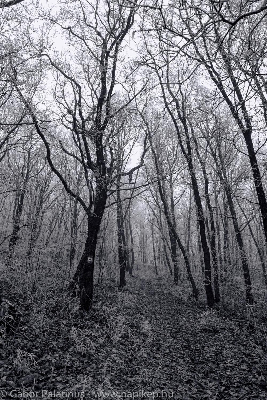frozen forest series II.