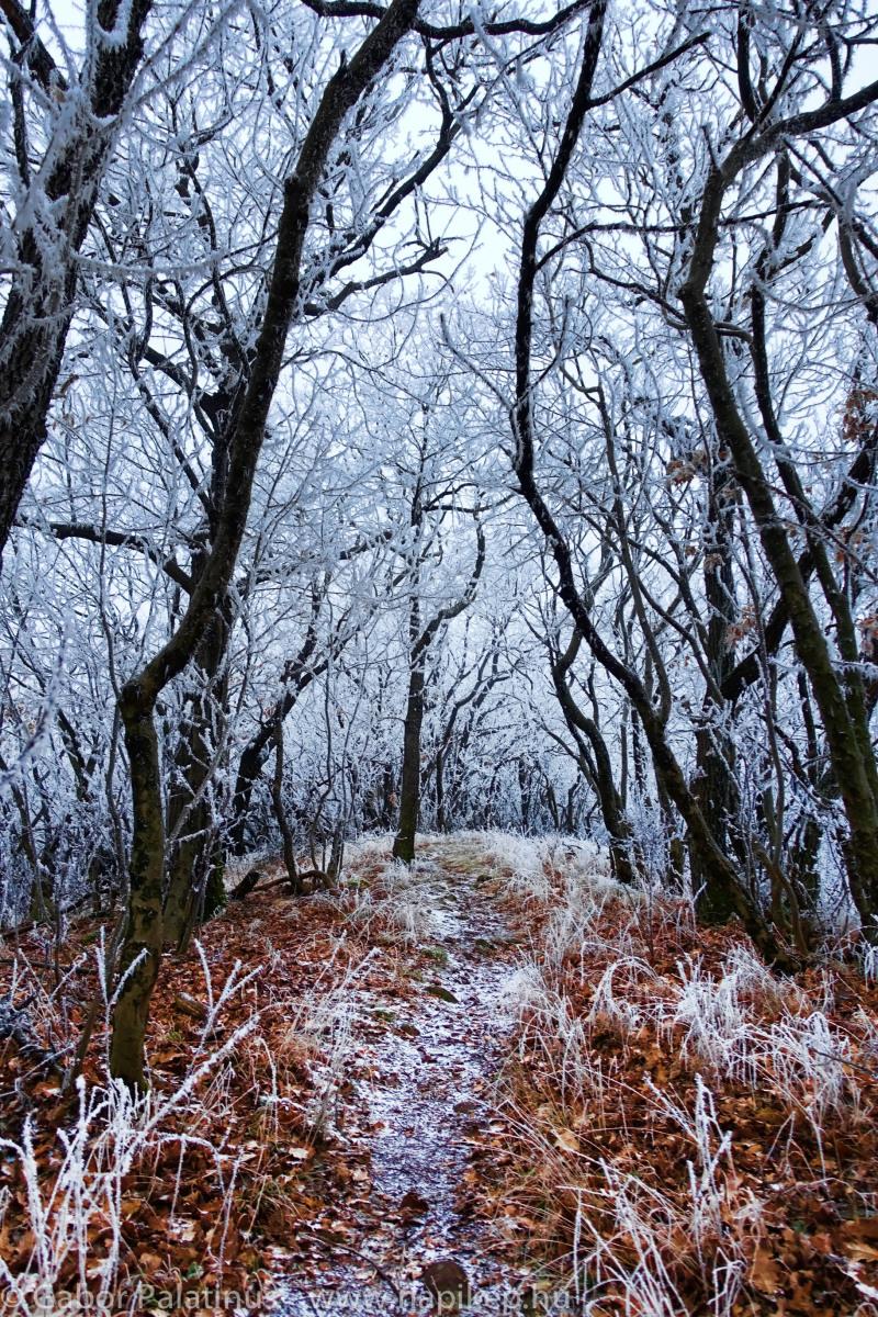 frozen forest series III.