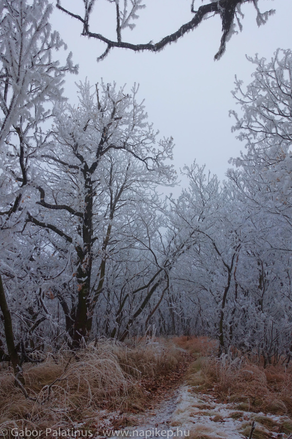 frozen forest series IV.
