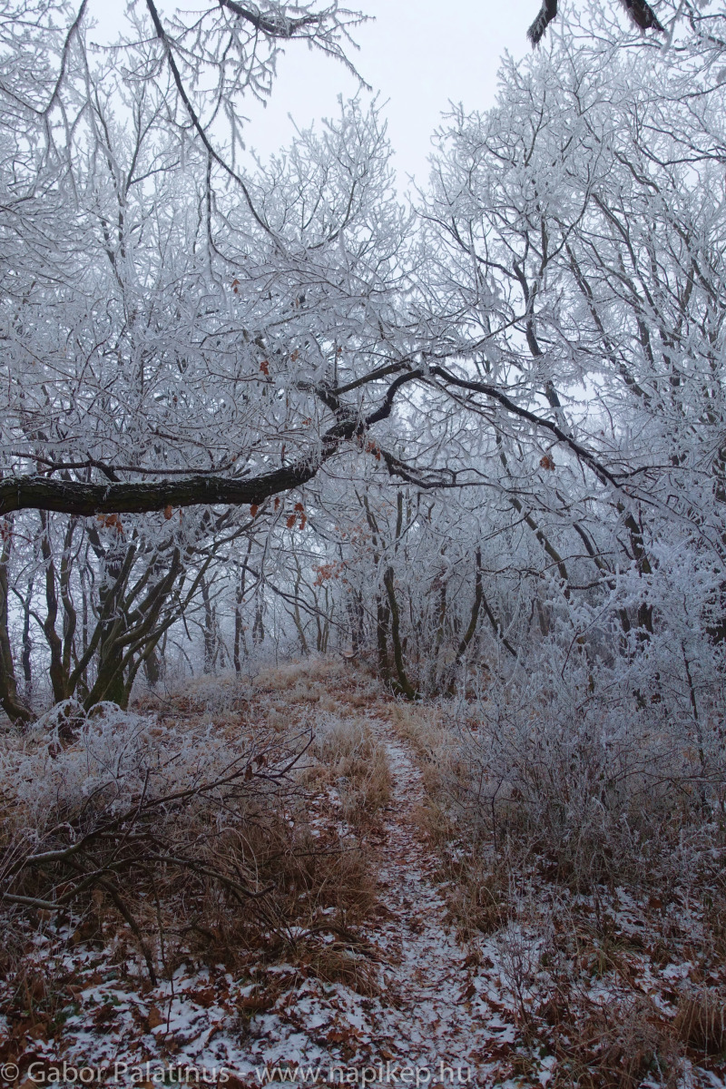 frozen forest series V.