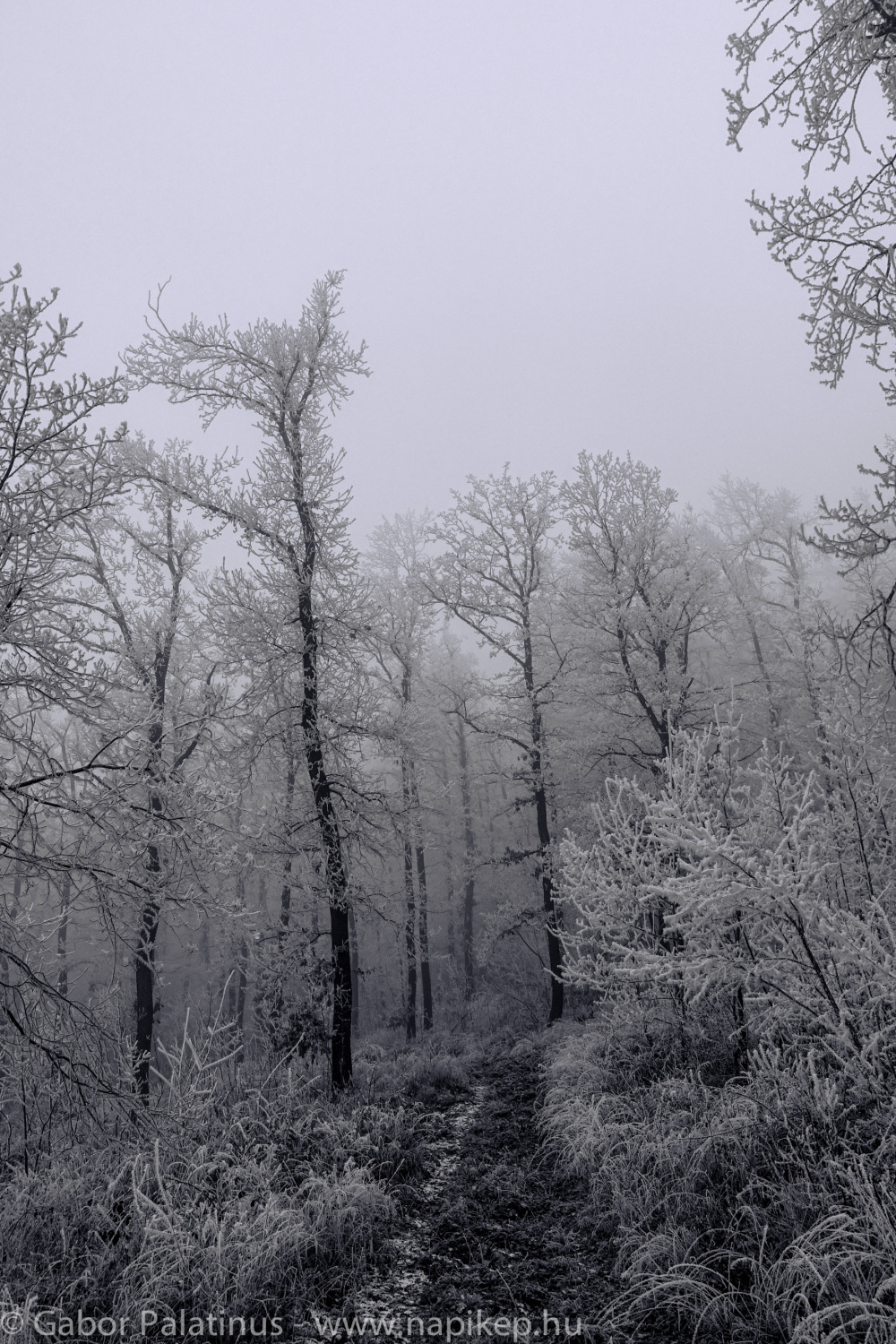 frozen forest series VI.