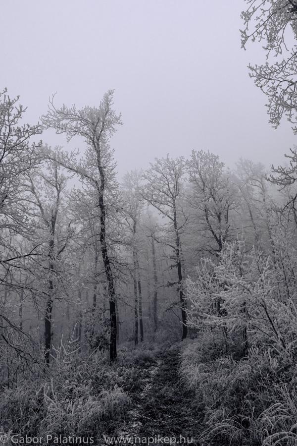 frozen forest series VI.