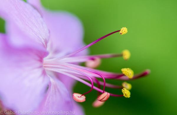 getting into the world of macro I