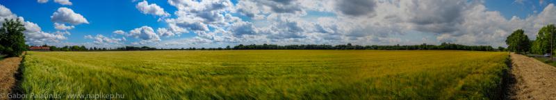 golden field panorama