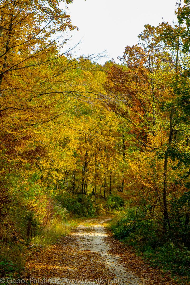 autumn walk I.