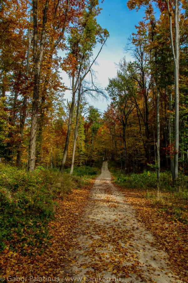 autumn walk II.