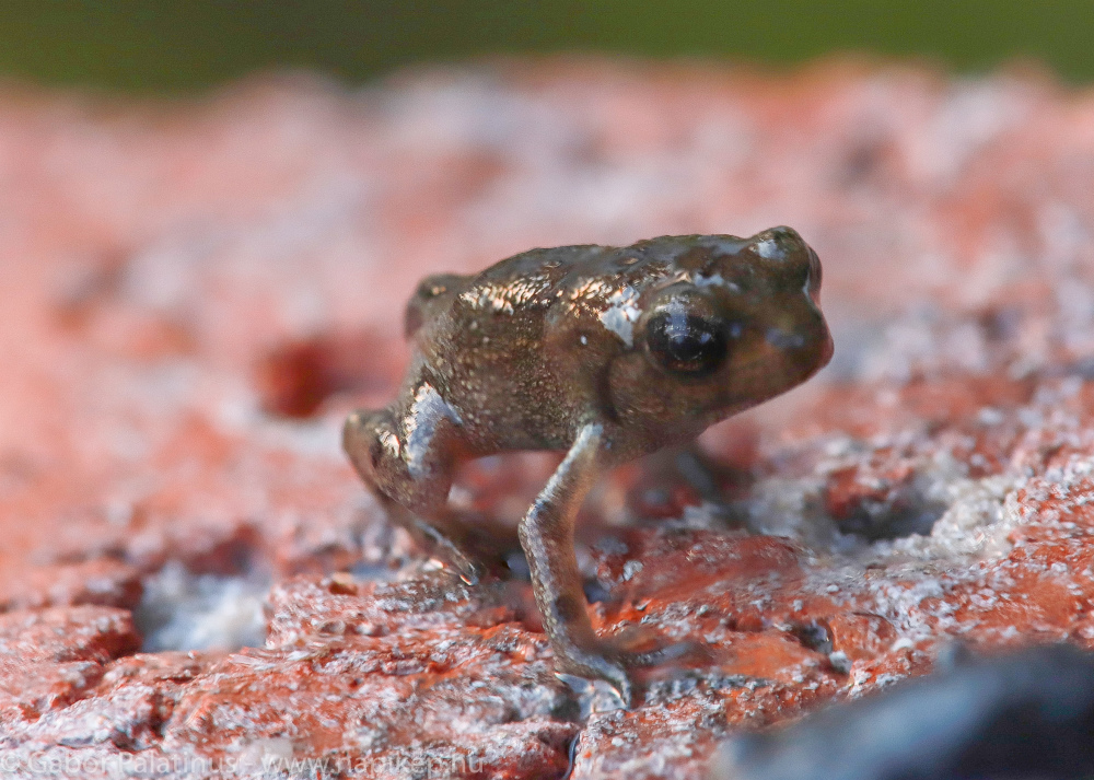 first steps as a frog