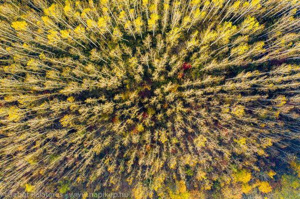 autumn forest bird view
