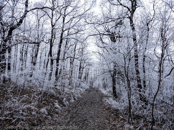 winter running scene
