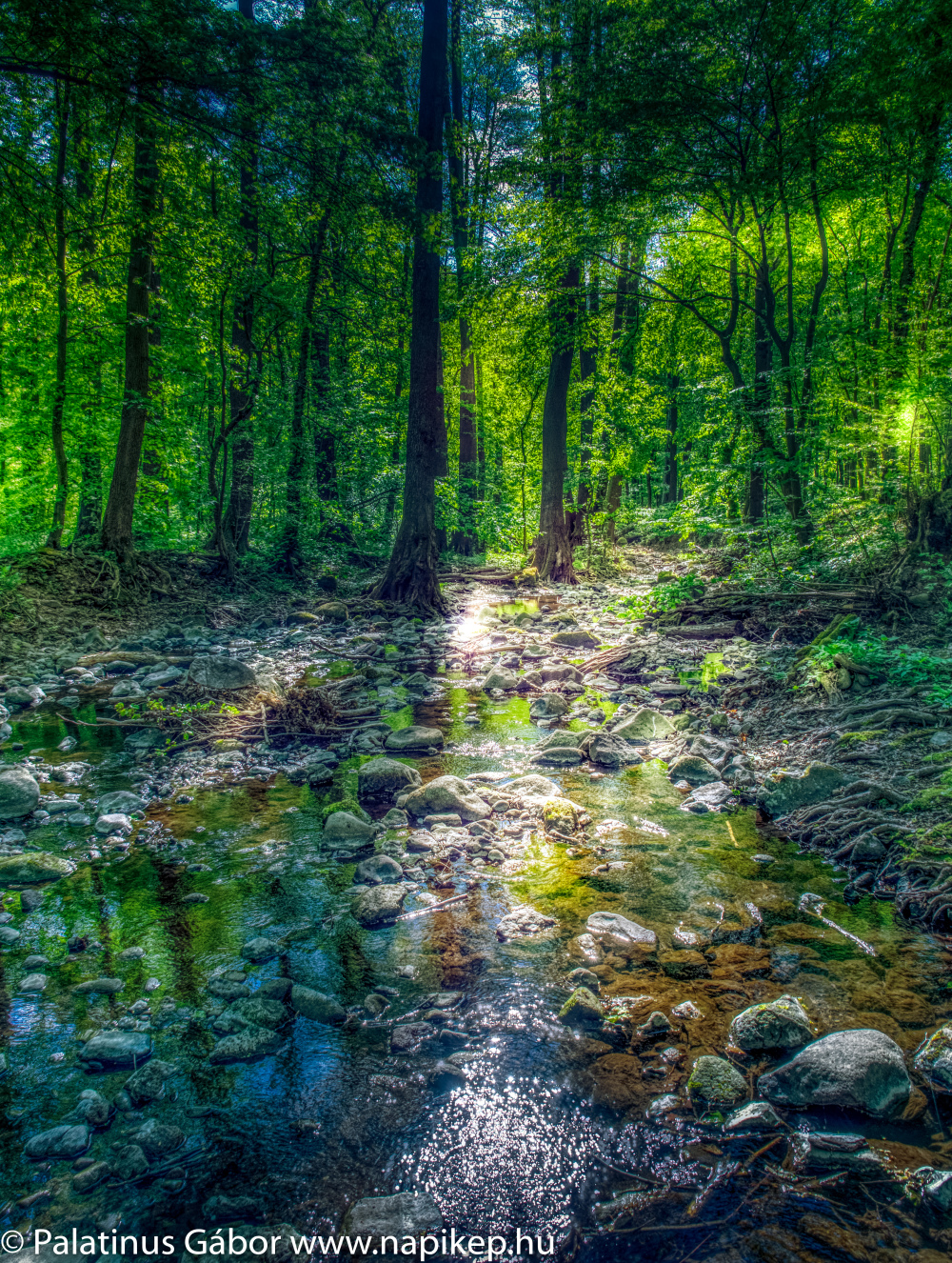 Bükkös brook in HDR III.