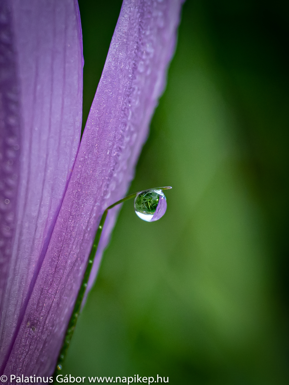 morning drip