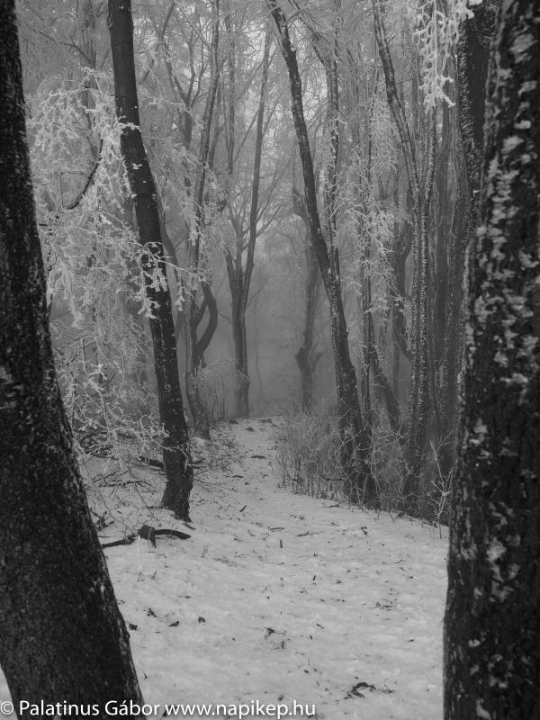 foggy frozen path