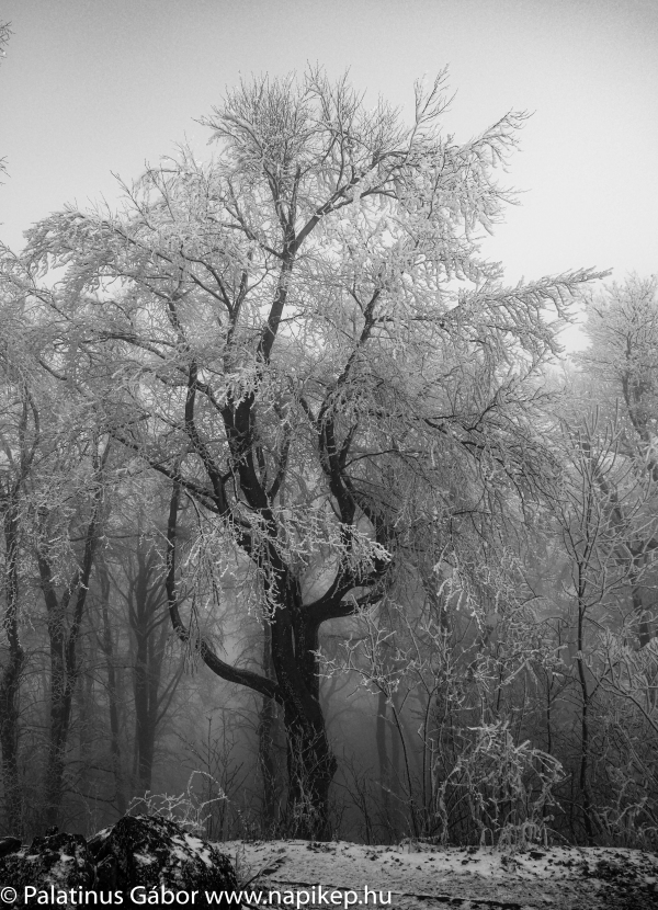foggy tree in the fog