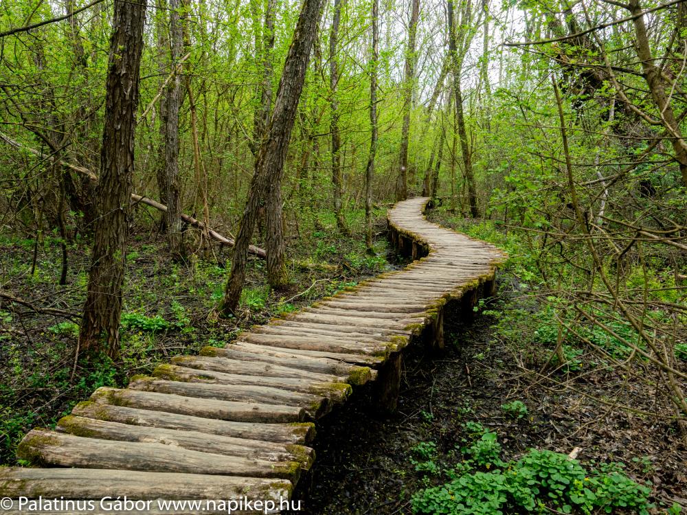 little path