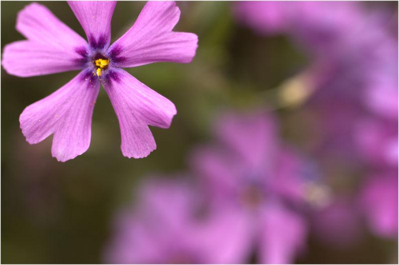 pollen on the petals