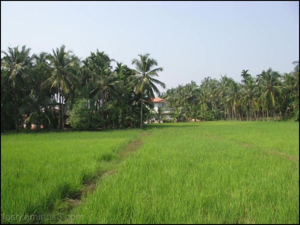 A village in North Kerala