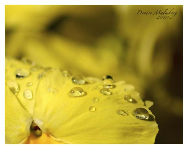 Yellow flower with waterdrops