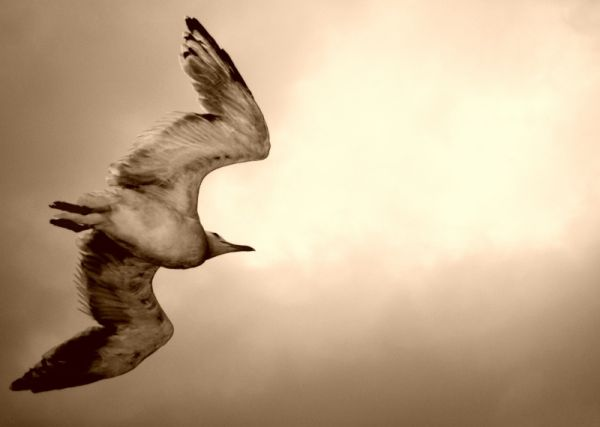 an albatros flying beside our boat